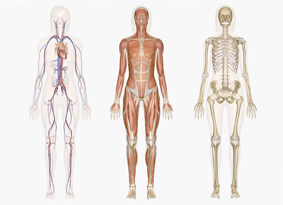 Importance of Discovering Marieb's Human Anatomy (9th Edition) in PDF